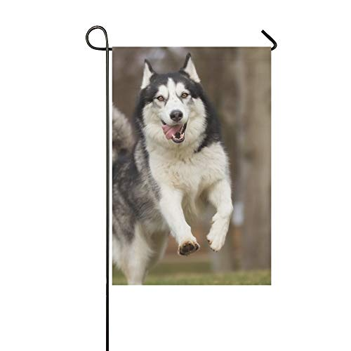 Home Decorative Outdoor Double Sided Purebred Siberian Husky Dog Without Leash Garden Flag,house Yard Flag,garden Yard Decorations,seasonal Welcome Outdoor Flag 12 X 18 Inch Spring Summer Gift ()