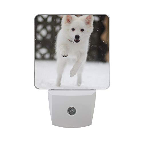 OuLian Night Light American Eskimo Puppy Dog Led Light Lamp for Hallway, Kitchen, Bathroom, Bedroom, Stairs, DaylightWhite, Bedroom, Compact