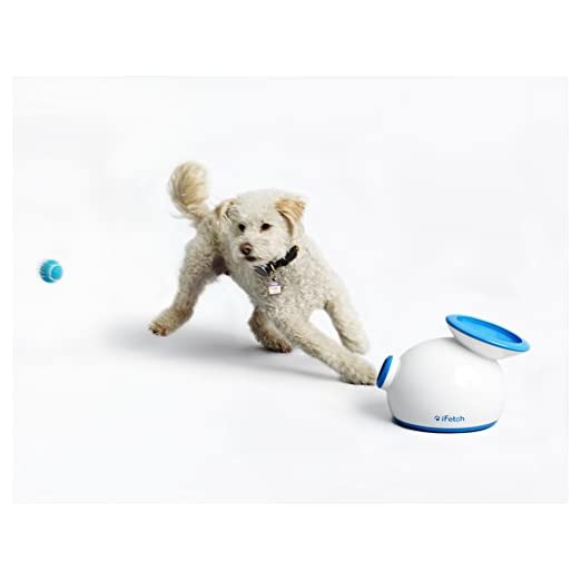 iFetch Interactive small Ball