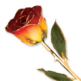 Long Stem Dipped 24K Gold Trim Yellow Red Genuine Rose In Gold Gift Box by Allmygold Jewelers