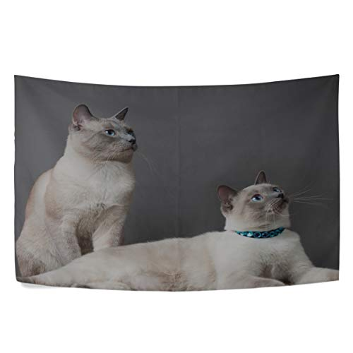 (MAXM Thai Cat Cats Couple Beautiful Thoroughbred Wall Hanging Tapestry Bedroom Living Room Beach Doorway Curtain Christmas Thanksgiving Day Decoration 60 X 40 Inch)