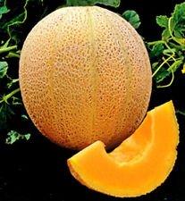 New Melon , IROQUOIS MUSKMELON , Cantaloupe , 40 + Seeds !