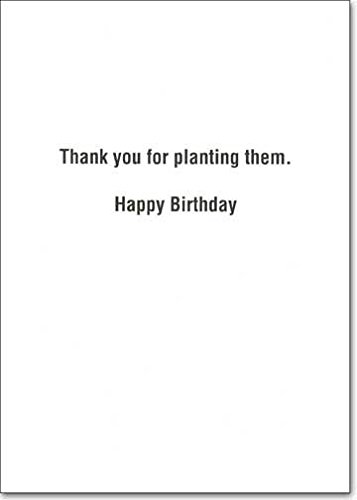 Amazon Giant Redwood Trees Recycled Paper Greetings Birthday