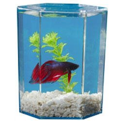(Kollercraft Betta Tank Aquarium Kit 1-pint capacity-)