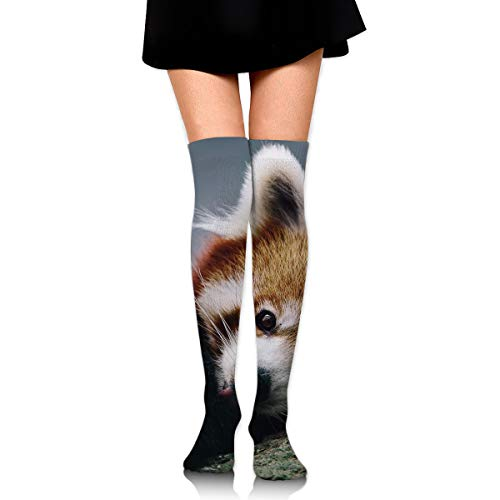 Cute Red Panda High Knee Socks For Boots Long Dress Compression Polyester Sox Leg Tube Ideal ()