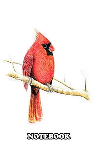 Notebook: Bird Cardinal , Journal for Writing, College Ruled Size 6