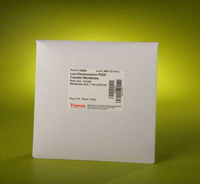 88585 - Pierce PVDF Transfer Membranes, Thermo Scientific - Individual Sheets - Each