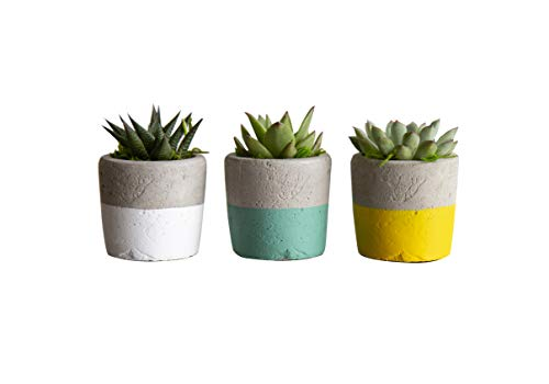 Hallmark Flowers 3-Piece Succulents In 3-Inch Terra Cotta Containers