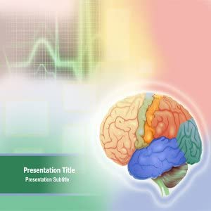 Amazon Com Animated Brain Anatomy Powerpoint Template