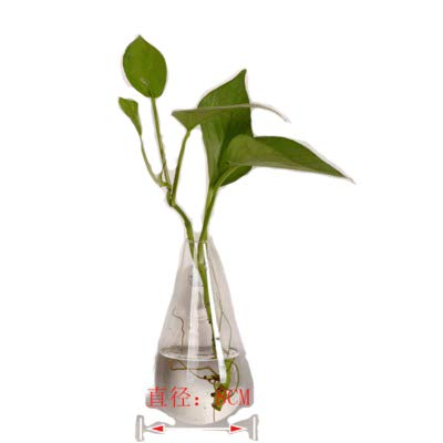 Amazon Waterdrop Shape Glass Wall Hanging Flower Vase Plant