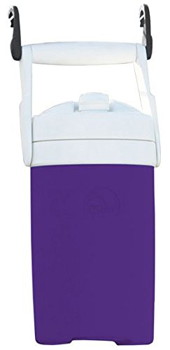 Igloo Products Corporation 000416671 Sport Cooler with Hooks, Purple, 1/2 gal