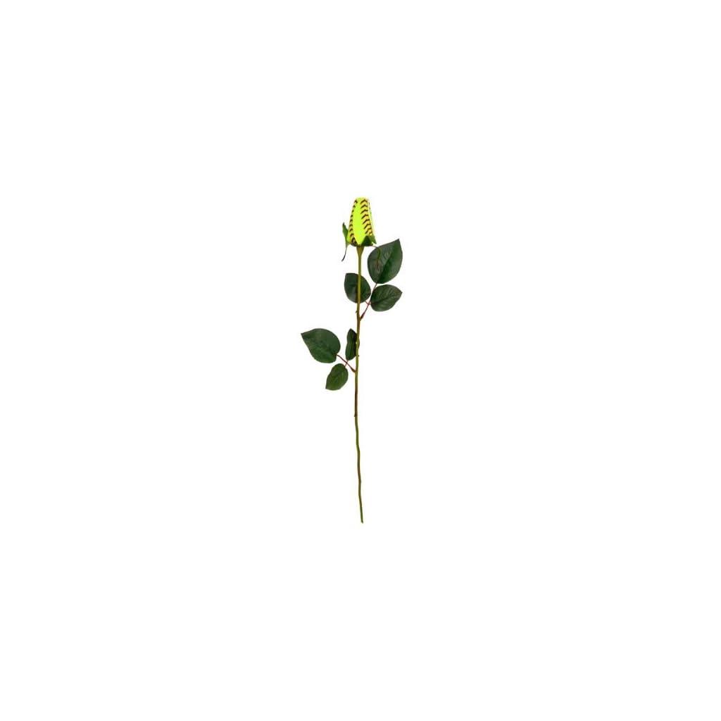 Softball-Rose-Flower