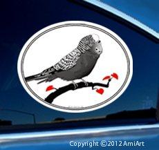 Amazoncom BUDGERIGAR Budgie Shell Parakeet Bird Lover Vinyl Car - Bird window stickers amazon