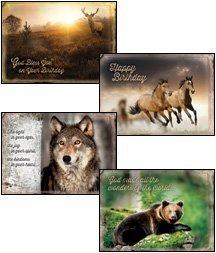 Wild Adventures - Scripture Greeting Cards - KJV - Boxed - Birthday