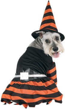 Halloween Witch Dog Costume (Size: Medium)