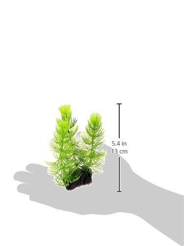 Amazon.com : eDealMax Planta de agua Peces de plástico tanque de decoración, DE 5, 5 pulgadas, Verde : Pet Supplies