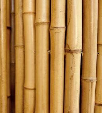 Cañas de bambú para sujetar hortalizas y otros usos, 180 cm ...