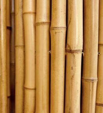 Siepe Di Bambu Prezzo.Canne In Bamboo Per Sostegno Ortaggi E Altri Usi Da Cm 180 10