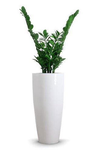Exklusiver großer Blumenkübel Pflanzkübel Fiberglas City 80 cm Weiß ...