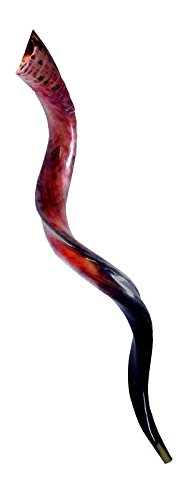 43-46'' Approx Great XXL Kudu Horn Shofar Full Polished Israel Beutiful Sound
