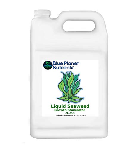 Blue Planet Nutrients Liquid Seaweed Gallon (128 oz) | Liquid Kelp Supplement | Hydroponic Aeroponic Soil Coco Coir | for All Plants & Gardens