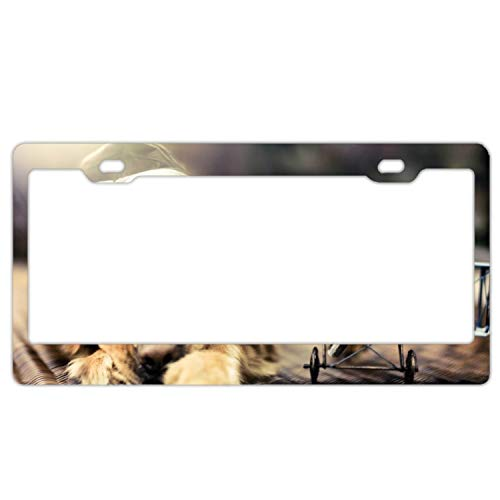 Logo Under Glass Team (Rongx License Plate Novelty Auto Car Tag Vanity Gift Puppy Glasses)