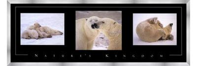 Poster Palooza Framed Nature's Kingdom-Polar Bears- 36x12 Inches - Art Print (Stainless Steel Frame)