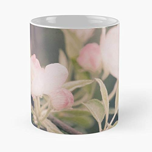 Apple Blossoms Flowers Tree - Funny Coffee Mug, Gag Gift Poop Fun Mugs (Blossom Coffee Apple)