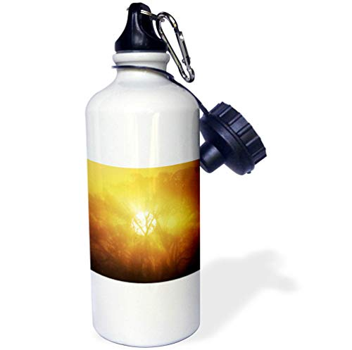 3dRose Stamp City - Nature - Photograph of a Foggy, Yellow and Orange Sunrise Through a Giant Tree. - 21 oz Sports Water Bottle (wb_295283_1) by 3dRose