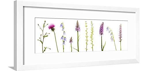 ArtEdge Meadow Flowers, Fleabane Thistle, Bearded Bellfower, Common Spotted Orchid, Twayblade, Austria White Wall Art Framed Print, 8x24, Soft ()