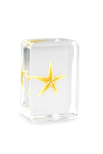 Starfish(Stelleroid)Paperweights Specimen for Science Education Paperweight for Book for Office for Desk(1.8x1.1x0.8)