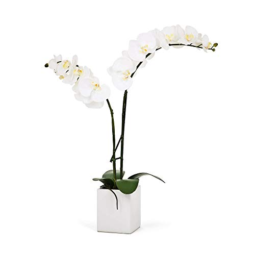 - Torre & Tagus 1684-100020 Orchid Potted Double Stem, 23-Inch, White