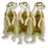 Meerkats Sterling Silver and Enamel Pin
