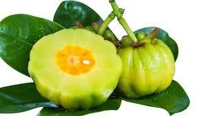 5 Seeds Garcinia Gummi-Gutta