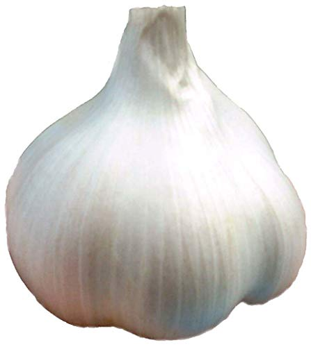 Kentucky's Best Elephant Garlic 4 Bulbs: Plant or Eat – Raw or Cooked, Non-GMO, All Natural