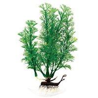 - Aqua-Plants Flowering Cabomba Aquarium Plant