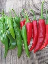 GO-CHU-JANG-cor/éen Chili 25 graines paste Korean Hot Pepper Id/éal pour GO-CHU