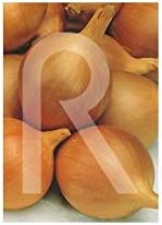 Rocalba - Semilla de cebolla babosa: Amazon.es: Jardín