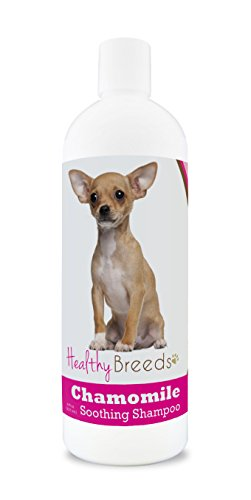 Healthy Breeds Chamomile Dog Shampoo & Conditioner with Oatmeal & Aloe for Chihuahua  - OVER 200 BREEDS - 8 oz - Gentle for Dry Itchy Skin - Safe with Flea and Tick Topicals