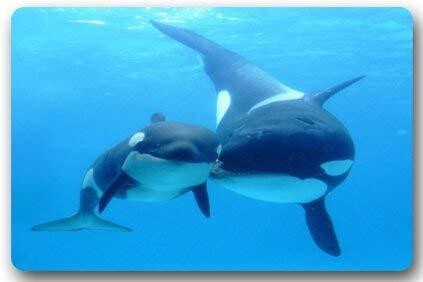 vbndgfhjd Killer Whale Orca Rectangle Entryways Non Slip Doormat ...