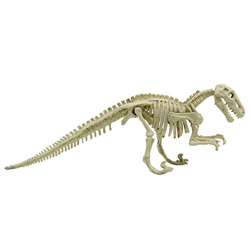 winemana Dinosaur Excavation Kit for Kids, Dino Fossil Dig Kit s Dinosaur  Skeleton for Children's Excavation Science Education DIY Toys (Raptor)