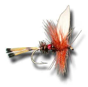 Royal Coachman Fly Fishing Fly - Size 10 - 3 Pack