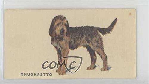 Otterhound (Trading Card) 1931 Player's Dogs from Paintings by Arthur Wardle - Tobacco [Base] - Transfers #OTTE