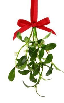 amazon com mistletoe real fresh cut with satin hanging ribbon