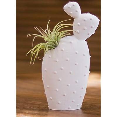 "LiveTrends""Santa Fe"" - Prickly Pear : Garden & Outdoor"