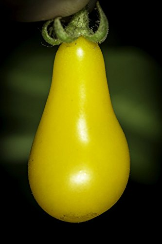 25 Seeds of Heirloom Yellow Pear Cherry Tomato Seeds - Non-GMO