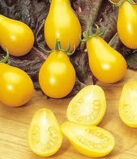 300 YELLOW PEAR TOMATO Lycopersicon Lycopersicum Fruit Vegetable Seeds (Plants Pear Tomato)