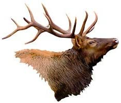 Next Innovations Elk Head