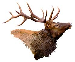 Next Innovations Metal Wall Art Decor Elk Head Wall Art