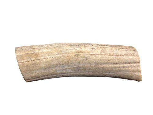 QT Dog All Natural Chew Toy, Jumbo (Bar Antler)